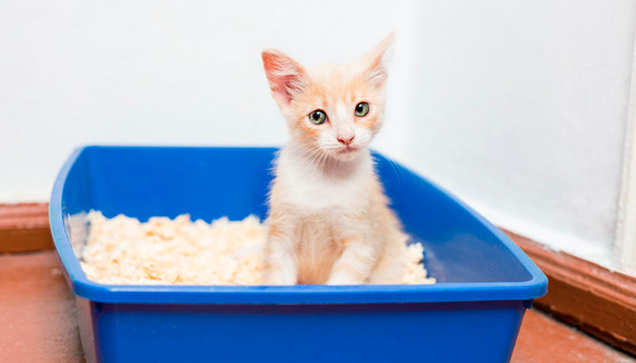 Bandeja higiénica para gatos