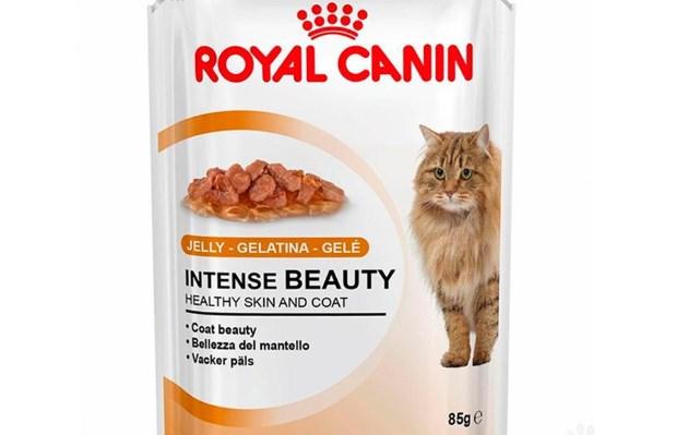 Mantener el Peso ideal en tu Gato