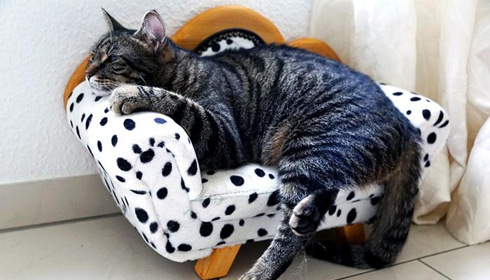 gato enfermo y cansado