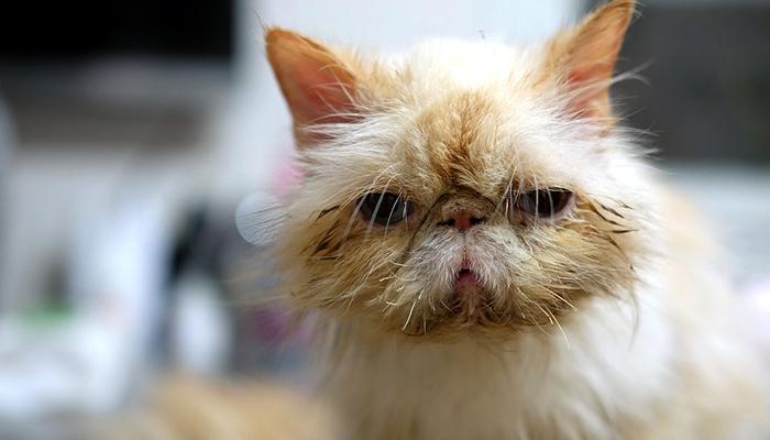 el gatito desvanecido se entristece