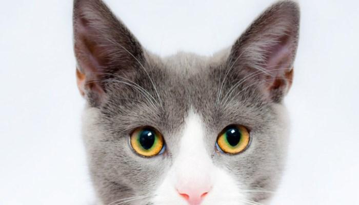 características que debe tener un pienso para gatos