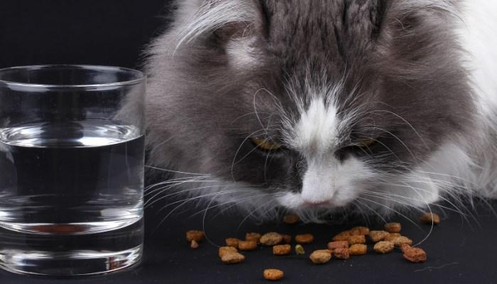 tipo de alimentos para gatos