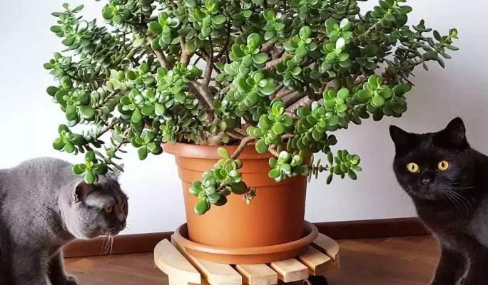 Los árboles también son beneficiosos para tu gato