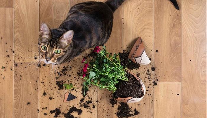 Plantas seguras para gatos que tienen flores
