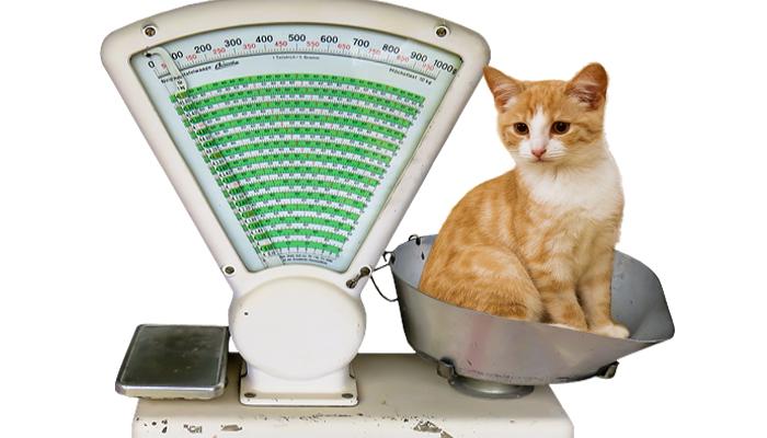 Cuida el peso de tu gato esterilizado