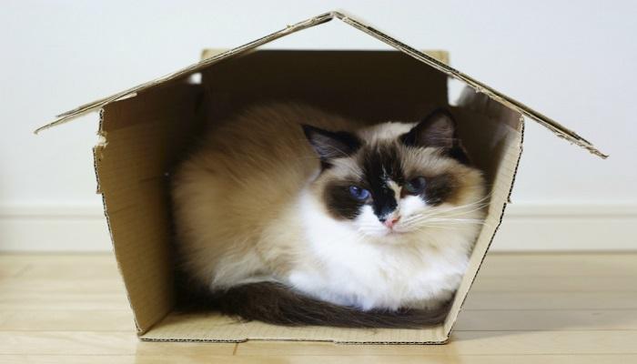 gatito en su casita