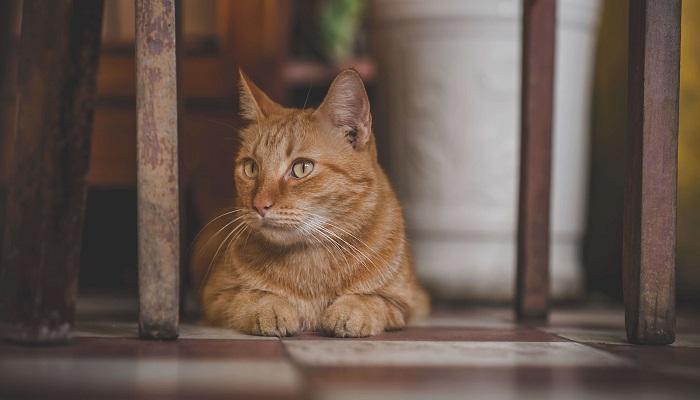 gatito en la comodidad de su hogar.