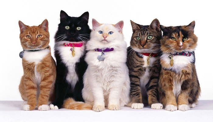 varios gatitos de razas