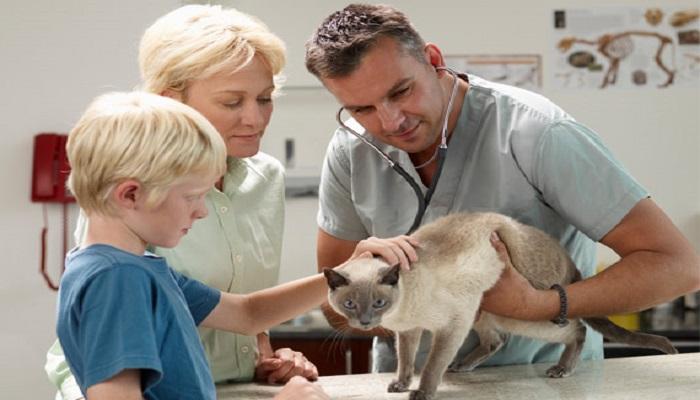 Revisión del veterinario al gato.