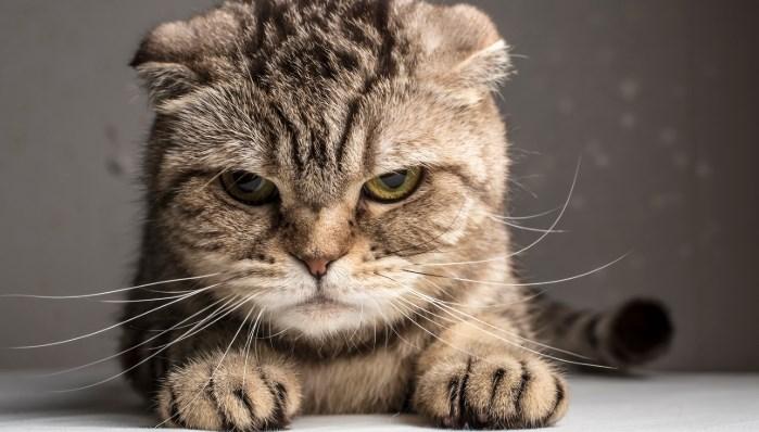 Cuánto dura la memoria de un gato