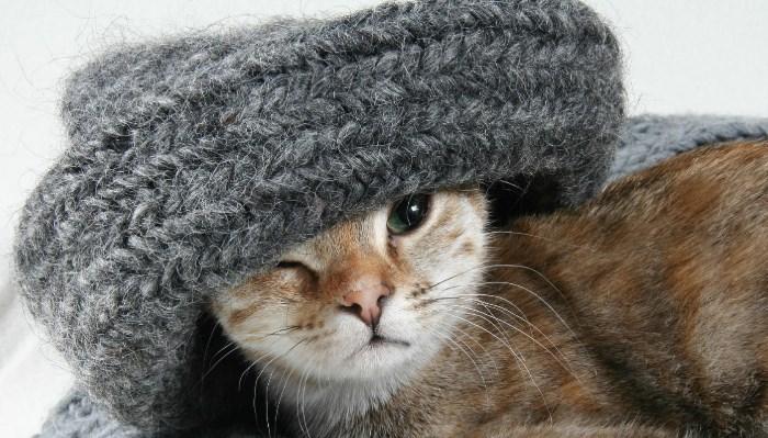 La capacidad de aprendizaje del gato