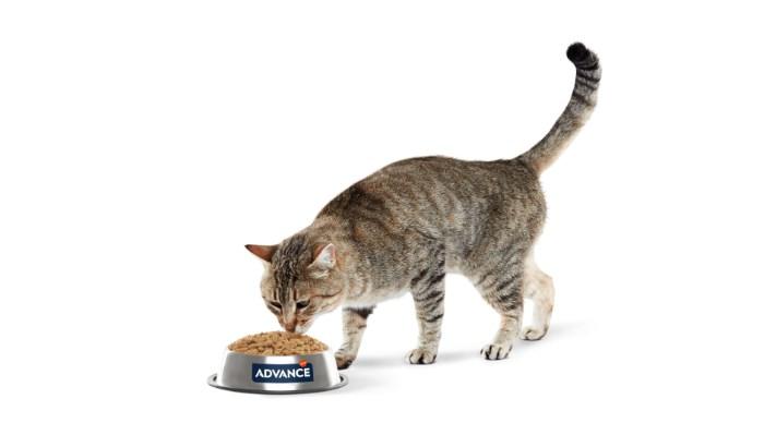 Mi gato no quiere comer por su entorno
