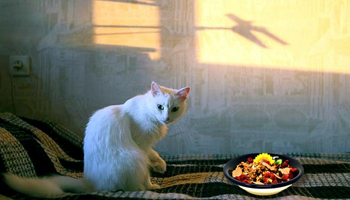 Mi gato no quiere comer