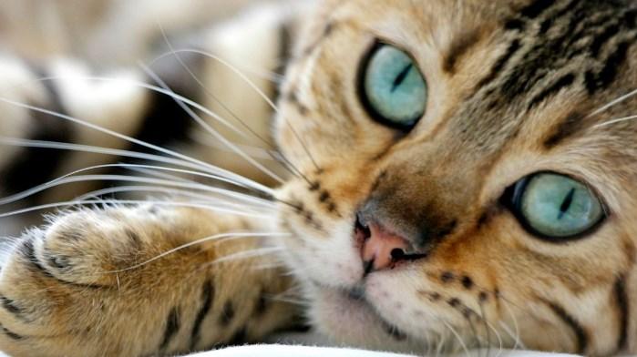 conductas del gato