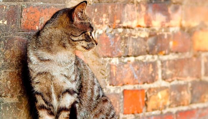 Qué hacen los gatos domésticos cuando se van de la casa por días