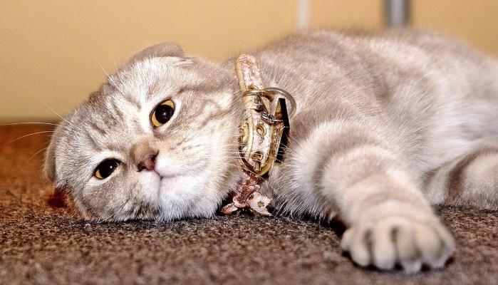 qué hacen los gatos domésticos