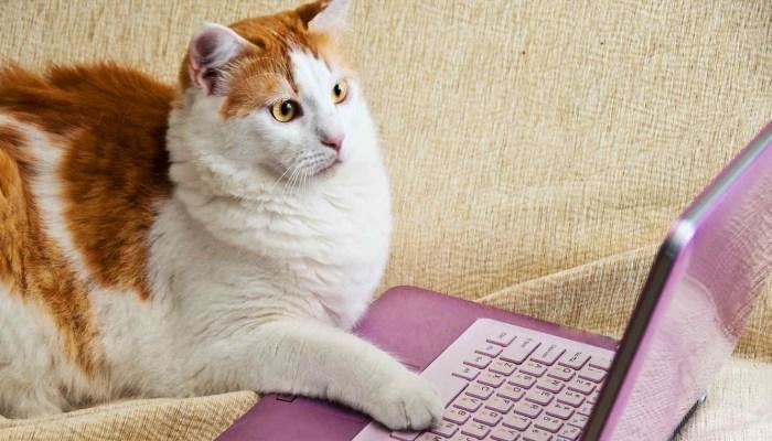 videos para gatos