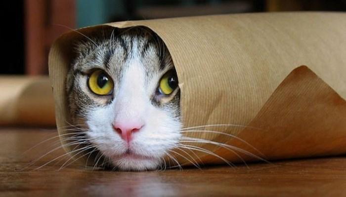 hallazgos sobre el cerebro de los gatos