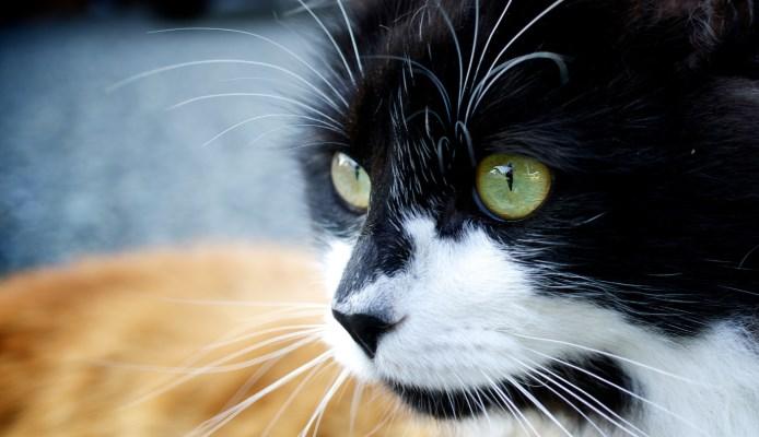 Pensamientos del cerebro de los gatos