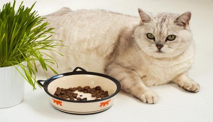 ¿por que mi gato no come?