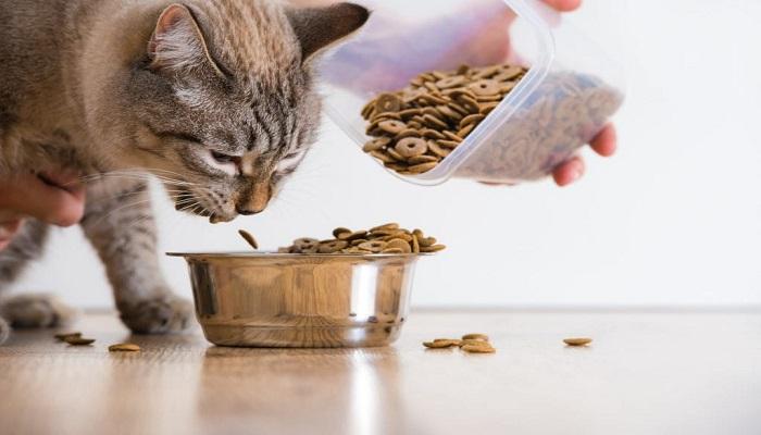 gato con apetito.