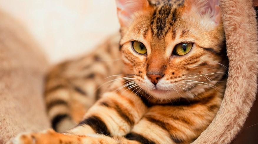 señales de alerta en la salud de nuestros gatos