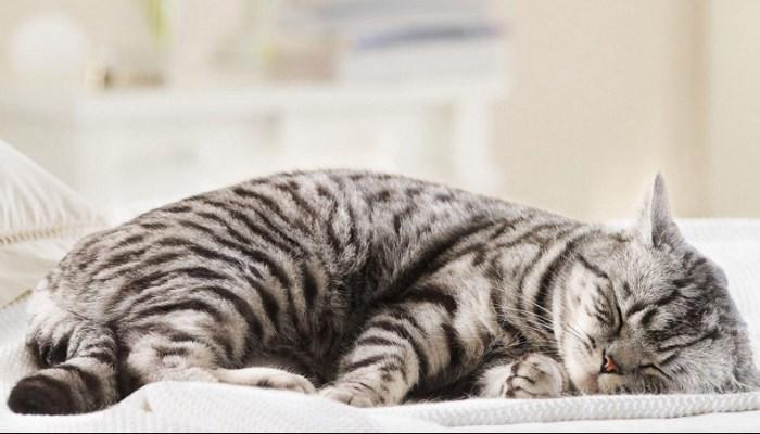 Mi gato duerme mucho