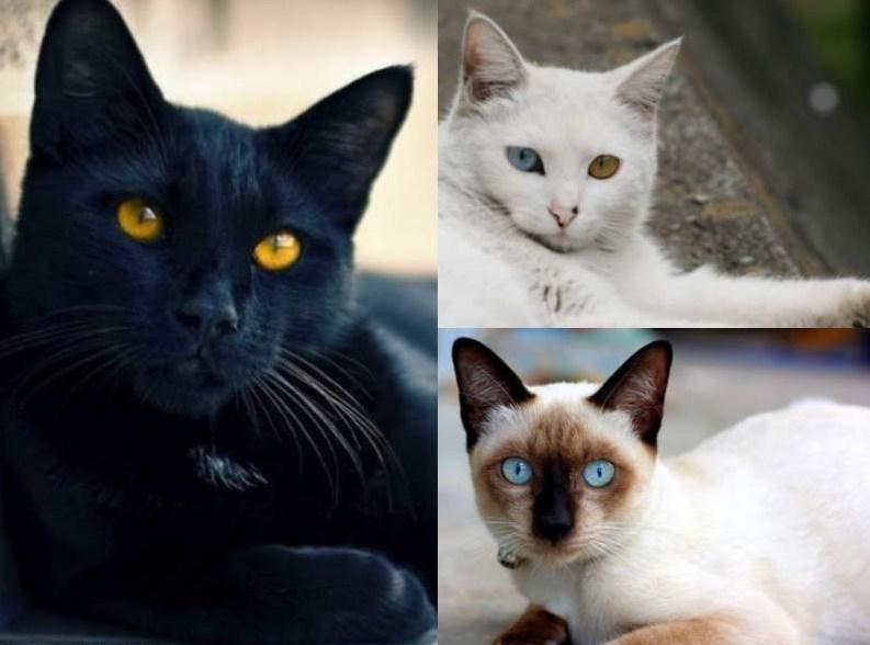 Los 12 Gatos Más Bonitos Del Mundo