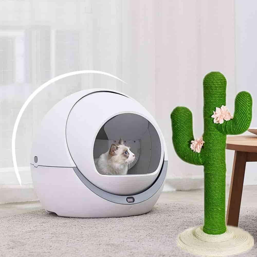 Arenero con gato dentro