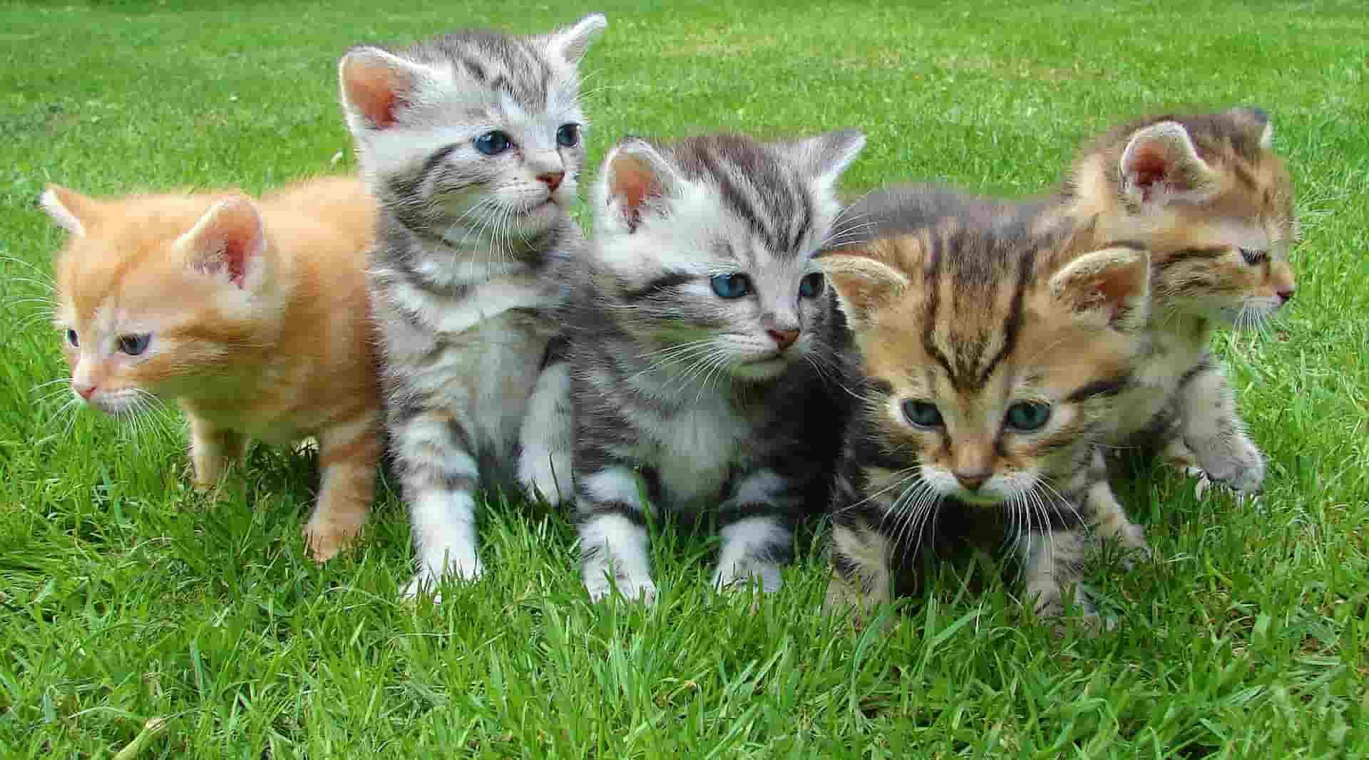 Gatitos pequeños en el cesped